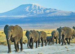 聯國報告:非洲最後冰川恐20年內消失